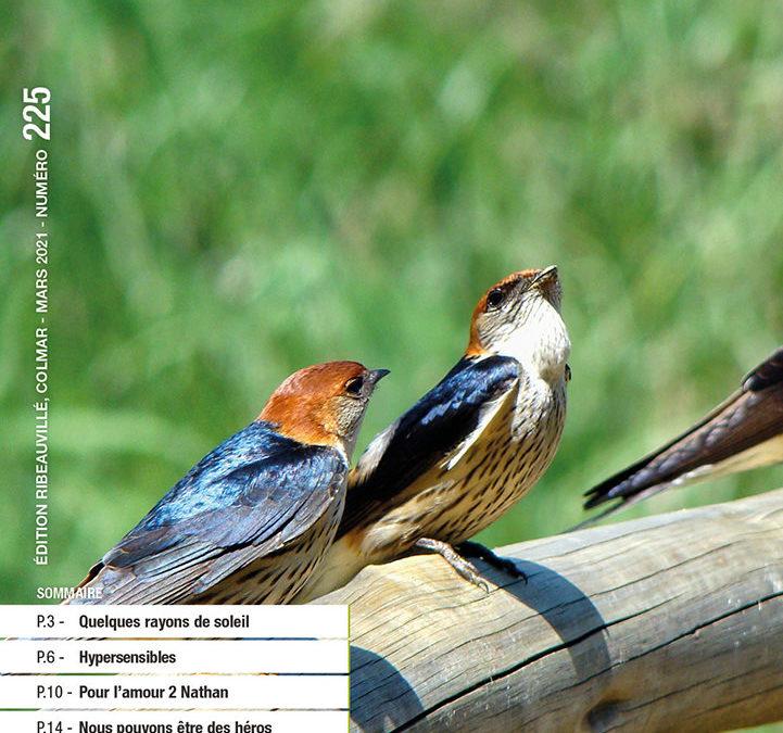Magazine raddar – Mars 2021